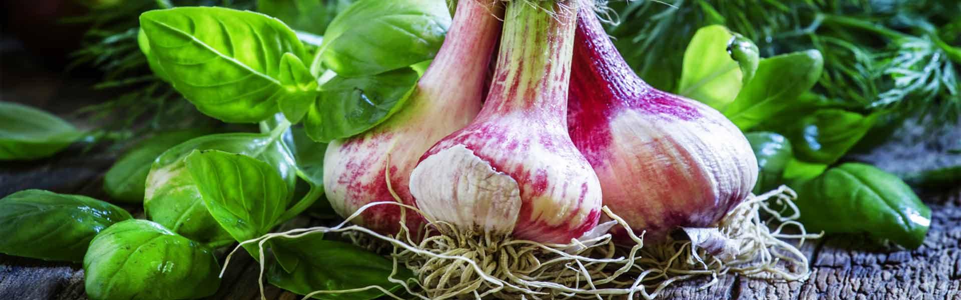 Kräuter_Gemüse_Gärtle